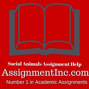 Social Animals Assignment Help